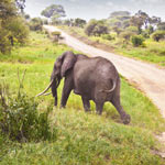 Reisen 50 plus Südafrika