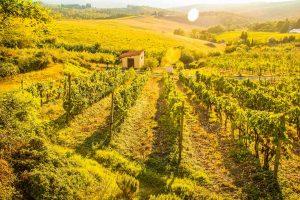 E-Velo Reisen in der Toskana - Weinberge im Chianti