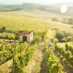 Greve in Chianti | BELVELO E-Velo Reise durch die Toskana