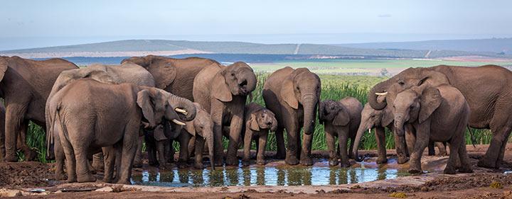 Südafrika Sehenswürdigkeiten Addo Elephant Park