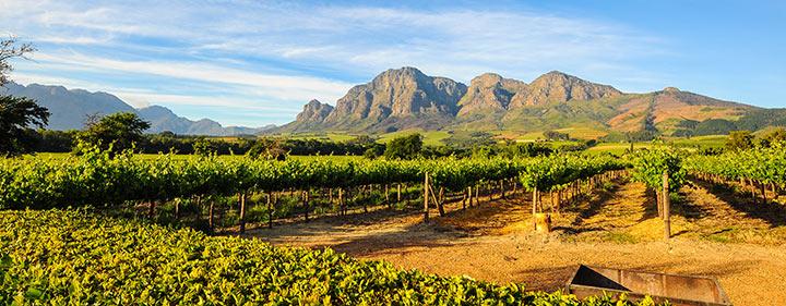Sehenswürdigkeiten in Südafrika - Stellenbosch