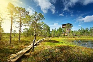 E-Bike Rundreise Baltikum - Lahemaa Nationalpark