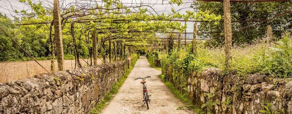 Der Jakobsweg in Portugal mit dem E-Bike - ein typischer Weg unter den Weinreben